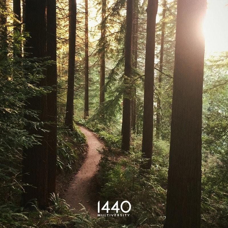 1440 Multiversity Redwoods-The Artist.s JourneyWorkshop