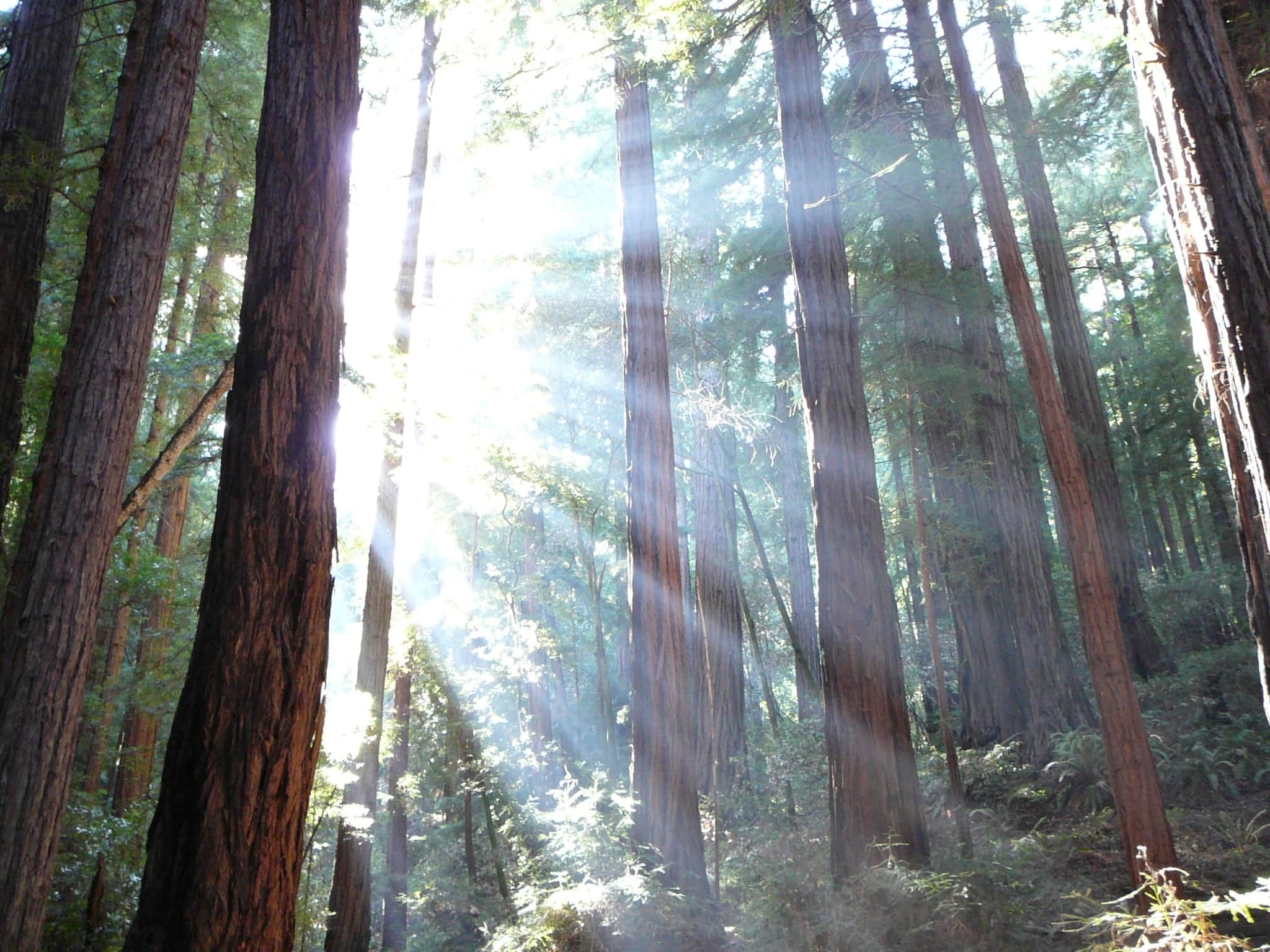 Fog In The Redwoods- One To Zero: Fear, Risk & Creativity- Nancy Hillis MD and Bruce Sawhill PhD